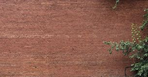 Ornamental plants decorate brick wall Royalty Free Stock Photos