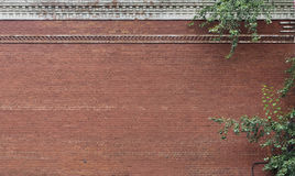 Ornamental plants decorate brick wall Stock Image
