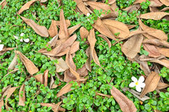 Ornamental plants with dry leaves Stock Photography