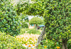 Ornamental plants, dwarf trees in the park. Stock Images