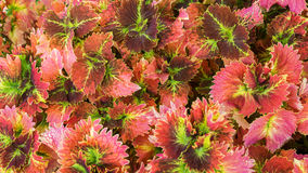 Ornamental plants Stock Image