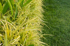 Ornamental plants and the grass of gardening Stock Photos
