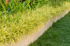 Ornamental plants and the grass of gardening Royalty Free Stock Image
