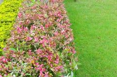 Ornamental plants on green grass lawn Royalty Free Stock Photos