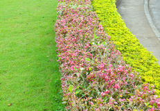 Ornamental plants on green grass lawn Stock Images
