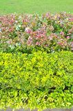 Ornamental plants on green grass lawn Royalty Free Stock Photography