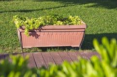 Ornamental plants growing in a pot in garden Stock Photo