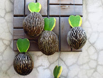 Ornamental plants hang on wall Stock Image