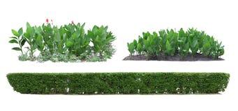 Ornamental plants, hedges. Stock Image