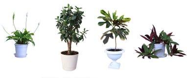 Ornamental plants. Stock Image