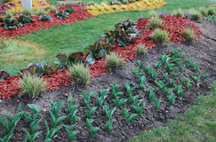 Ornamental plants for landscaping. Royalty Free Stock Images