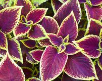 Ornamental plants Royalty Free Stock Photos