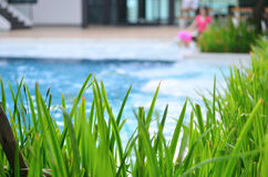 Ornamental plants with a pool background Royalty Free Stock Image