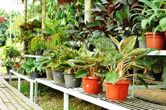 Ornamental plants shop Royalty Free Stock Photo