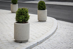 Ornamental Plants on the Sidewalk. Next to the Road Stock Photo