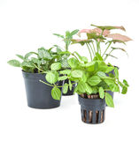 Ornamental plants sprout on white background stock image
