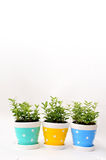 Ornamental plants in vase with copy space for text Stock Photos