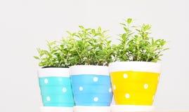 Ornamental plants in vase Stock Photo