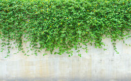 Ornamental plants on wall. Stock Photography