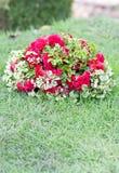 Ornamental Polyscias Guilfoylei. Royalty Free Stock Photos