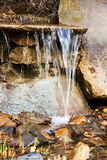 Ornamental pond in garden Stock Images
