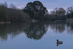 The Ornamental Pond, Southampton Common, on a cloudy morning Stock Image