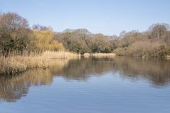 The  Ornamental Pond,  Southampton Common on a sunny day in Spring Stock Images