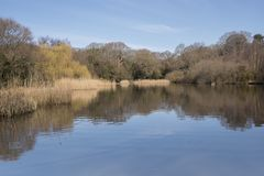 The  Ornamental Pond,  Southampton Common on a sunny day in Spring Stock Photography