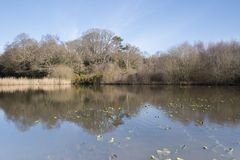 The  Ornamental Pond,  Southampton Common on a sunny day in Spring Stock Image