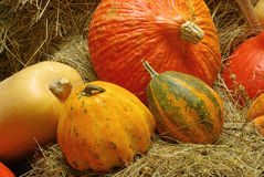 Ornamental Pumkin 05 Royalty Free Stock Photography