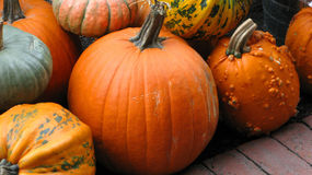 Ornamental pumpkin Stock Images