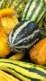 Ornamental pumpkin Stock Photography