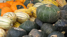 Ornamental pumpkin Stock Photos