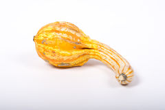 Ornamental pumpkin Royalty Free Stock Image