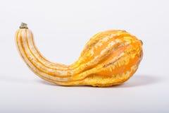 Ornamental pumpkin Royalty Free Stock Image