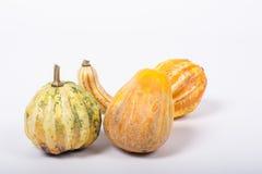 Ornamental pumpkin Royalty Free Stock Photos