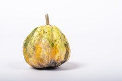 Ornamental pumpkin Stock Image