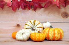 Ornamental pumpkin Stock Photo