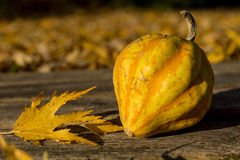 Ornamental pumpkin Royalty Free Stock Photography