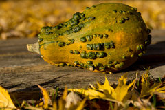 Ornamental pumpkin Royalty Free Stock Photos