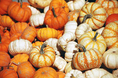 Ornamental pumpkins. Ornamental mini pumpkins in a pile Royalty Free Stock Photography