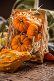 Ornamental pumpkins Stock Photo