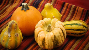 Ornamental pumpkins and gourds on colorful fabric Royalty Free Stock Photography