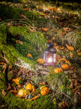 Ornamental pumpkins. On leaves in forest stock image