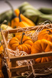 Ornamental pumpkins Royalty Free Stock Photography
