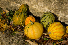 Ornamental pumpkins Stock Images
