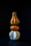 Ornamental pumpkins Stock Images