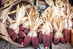 Ornamental Red Corn and Basket Stock Photography