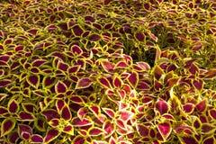 Ornamental shrubs Stock Photo
