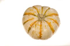 Ornamental Squash 3. Photo of an ornamental squash on white background royalty free stock image